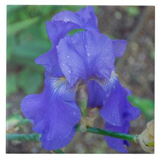 Carreau Tuile en céramique de photo d'iris bleu