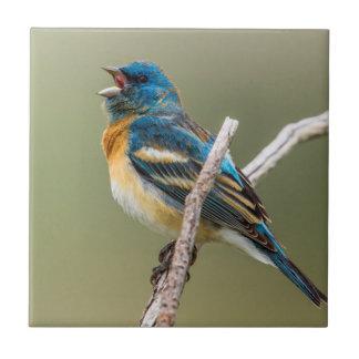 Carreau Un chant masculin d'oiseau chanteur d'étamine de
