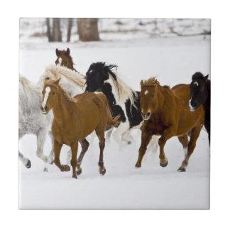 Carreau Un hiver pittoresque des chevaux courants
