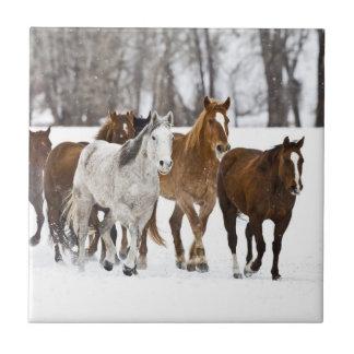 Carreau Un hiver pittoresque des chevaux courants 2