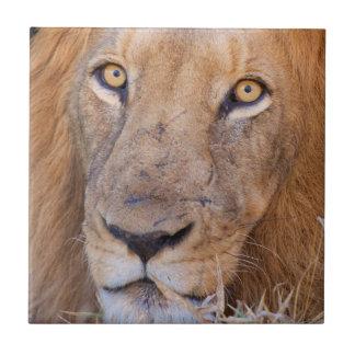 Carreau Un portrait d'un lion