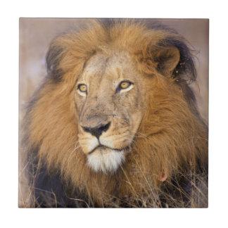 Carreau Un portrait d'un lion examinant la distance