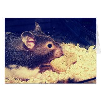 Carte affamée de hamster