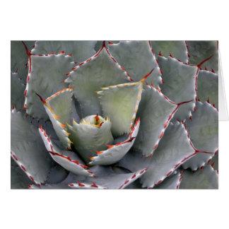 Carte agave Rouge-denté