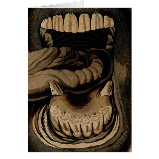 Carte Âges des dents de bouche de cheval gravant à