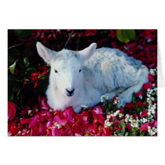 Carte Agneau blanc dans le printemps, fleurs de