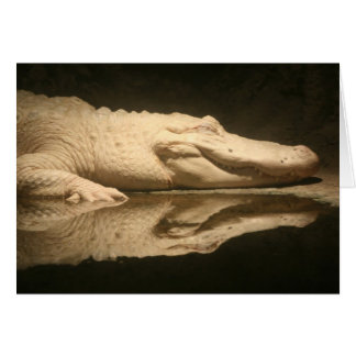 Carte Alligator blanc