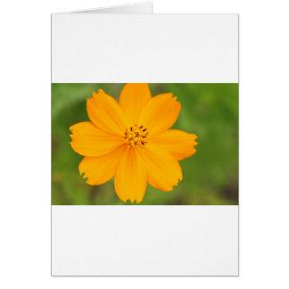 Carte Amarela de Diversos Flor
