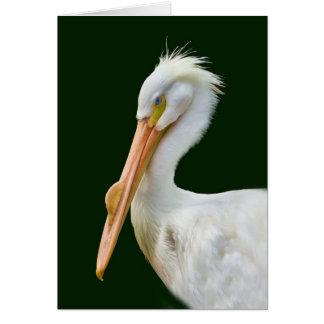 Carte américaine d'oiseau de pélican blanc