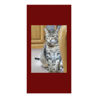 Carte Amour de chat tigré