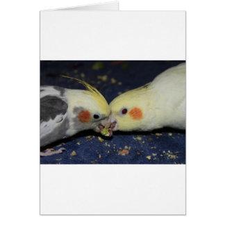 Carte Amour de Cockatiel