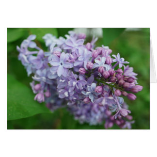 Carte Amour lilas