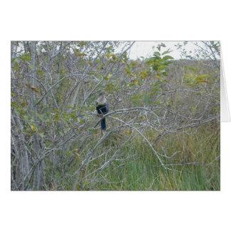 Carte Anhinga, la Floride Everglades, 1999