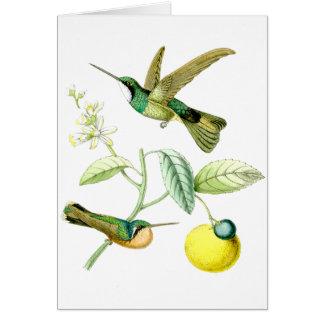 Carte Animaux de faune de fleurs d'oiseaux de colibri