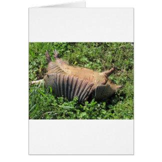 Carte Animaux écrasés de tatou - Dasypodidae