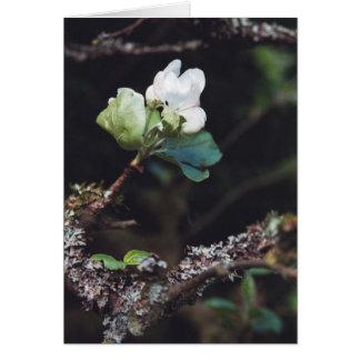 Carte AppleBlossom