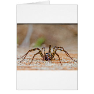 Carte araignée a