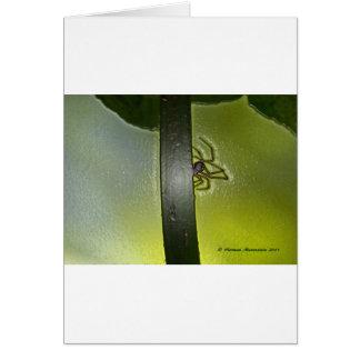 Carte araignée d