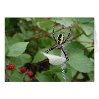 Carte Araignée de jardin