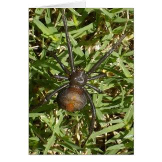 Carte Araignée de Redback sur l'herbe verte,
