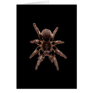 Carte Araignée de tarentule
