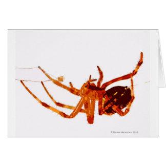Carte araignée e