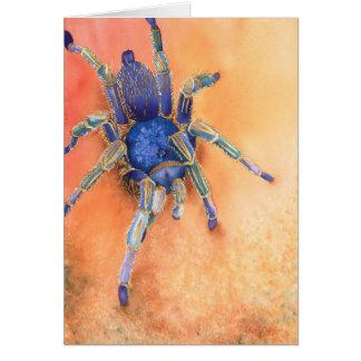 Carte Araignée - tarentule