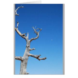 Carte Arbre de canyon grand contre le ciel bleu clair