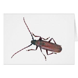 Carte Articles coordonnés de scarabée de Longhorn