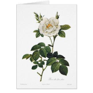Carte Assemblées plénières alba de flore de Rosa
