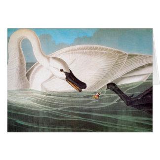 Carte Audubon : Cygne de trompettiste
