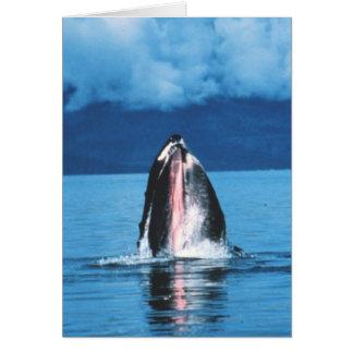 Carte Augmentation de baleine de bosse