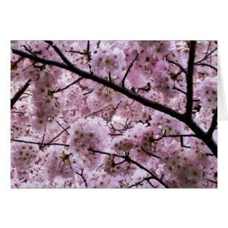 Carte Auvent de fleurs de cerisier