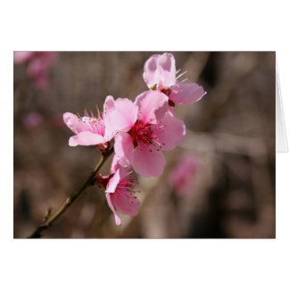 Carte Azalée de floraison