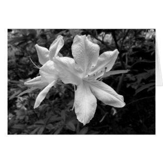 Carte Azalées/rhododendrons dans B&W