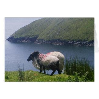 Carte Baie de négligence de quille de moutons