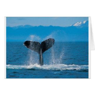 Carte Baleine de bosse