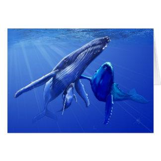 Carte Baleines de bosse