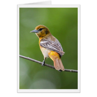 Carte Baltimore Oriole