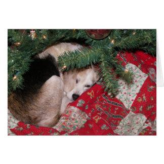 Carte Beagle somnolent de Noël