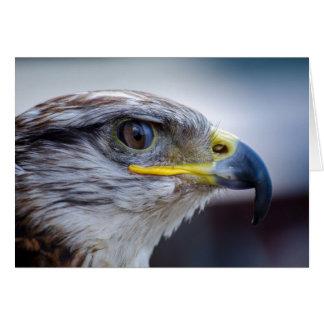 Carte Beau portrait de faucon