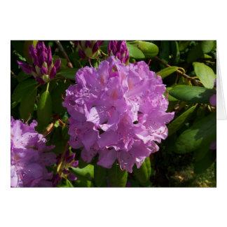 Carte Beau rhododendron de lavande