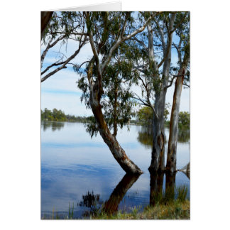 Carte Beauté d'un arbre de gomme Riverland Australie,