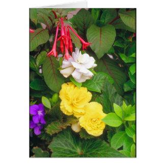 Carte Beautés de jardin d'agrément