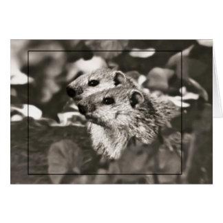 Carte Bébés 3 de Groundhog