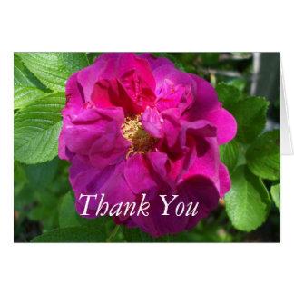 Carte Bégonia coloré joli par rose