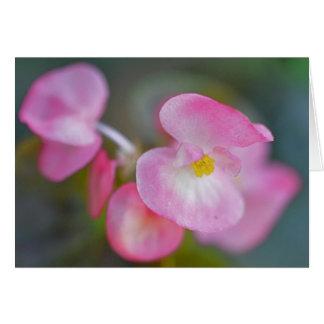 Carte Bégonia rose