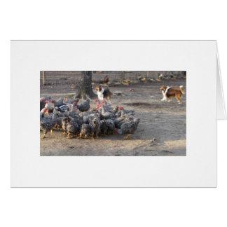 Carte Belle et gars travaillant un troupeau