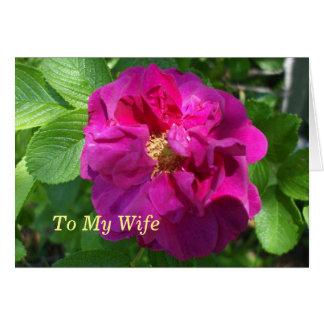Carte Belle fleur rouge de bégonia