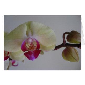 Carte Belles orchidées de jaune de bébé